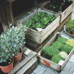 rastliny-v-zahradkarstve