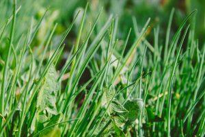 sukulenty-pre-zahradu