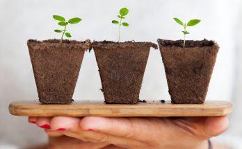 rastliny-na-dlani
