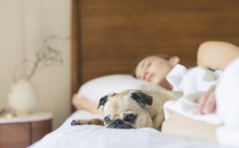 pes-v-posteli