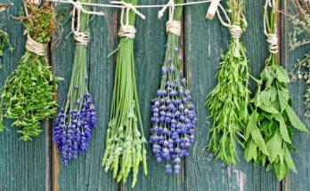 bylinky-proti-stresu