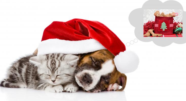 vianocny-darcek-pre-zvierata
